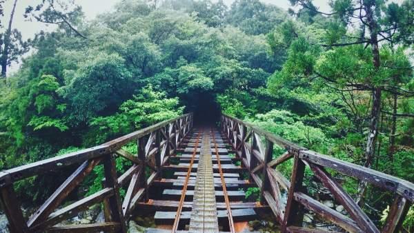 Yakushima : le dernier paradis de la randonnée sauvage au Japon
