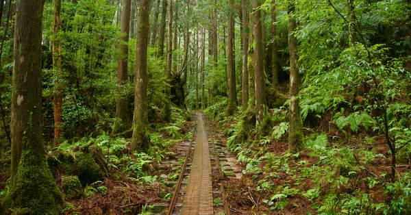 Sentiers de randonnée Japon Yakushima